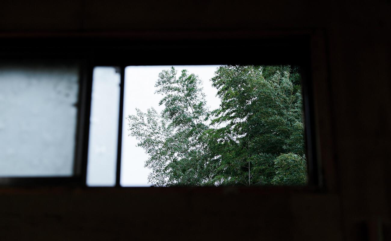 小窓から映る木々の画像